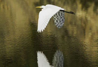 big river mendocino bird watching